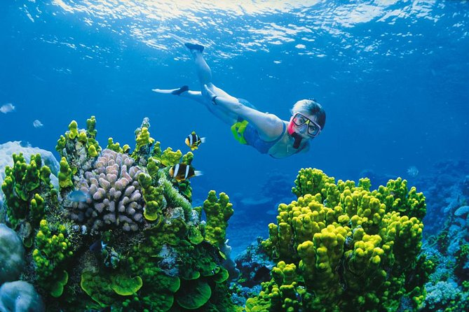 Full Day Snorkel In The Great Barrier Reef - Accommodation Melbourne
