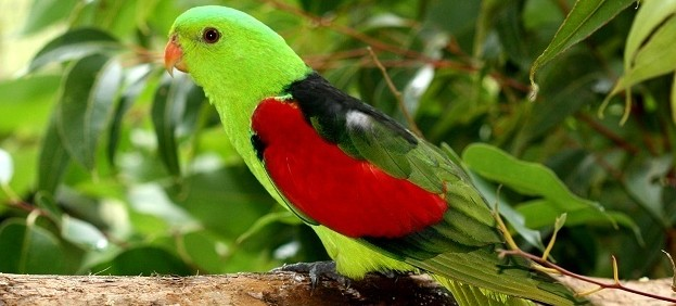 Birdworld Kuranda - Accommodation Melbourne
