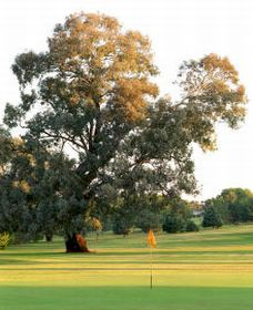 Cowra Golf Club - Accommodation Melbourne