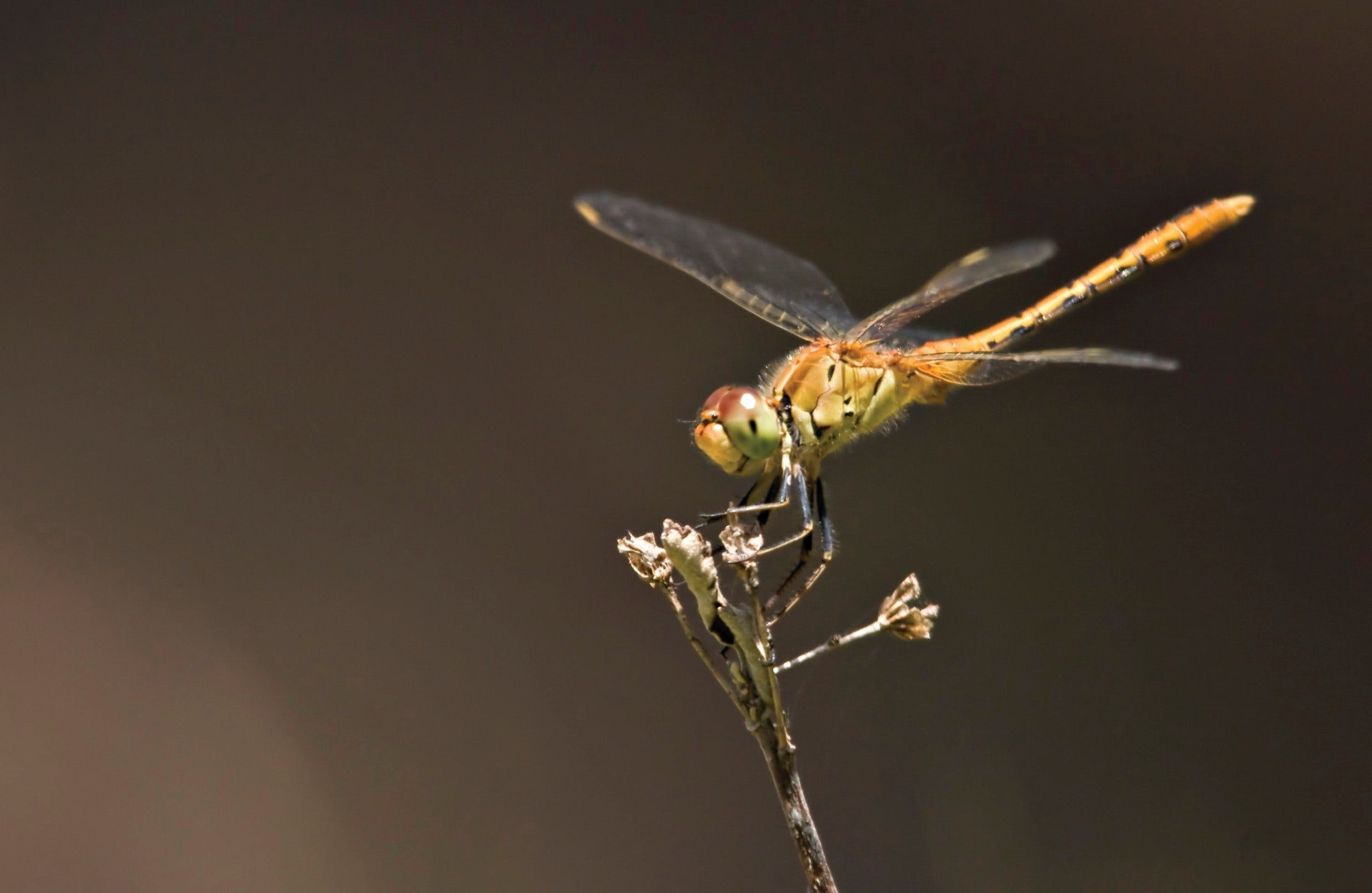 Dragonfly Discovery - Accommodation Melbourne