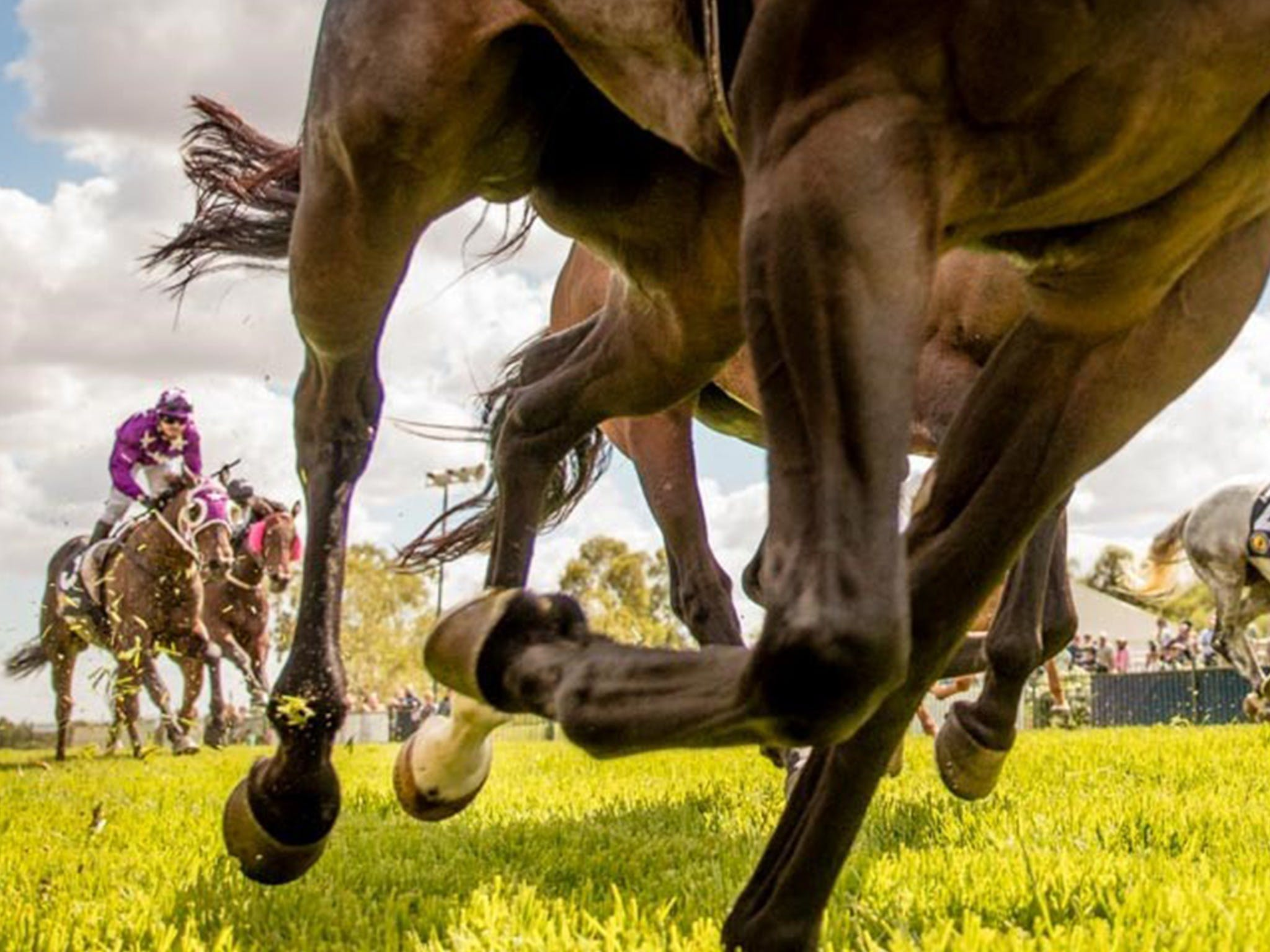 Night Markets and Race Day - Accommodation Melbourne