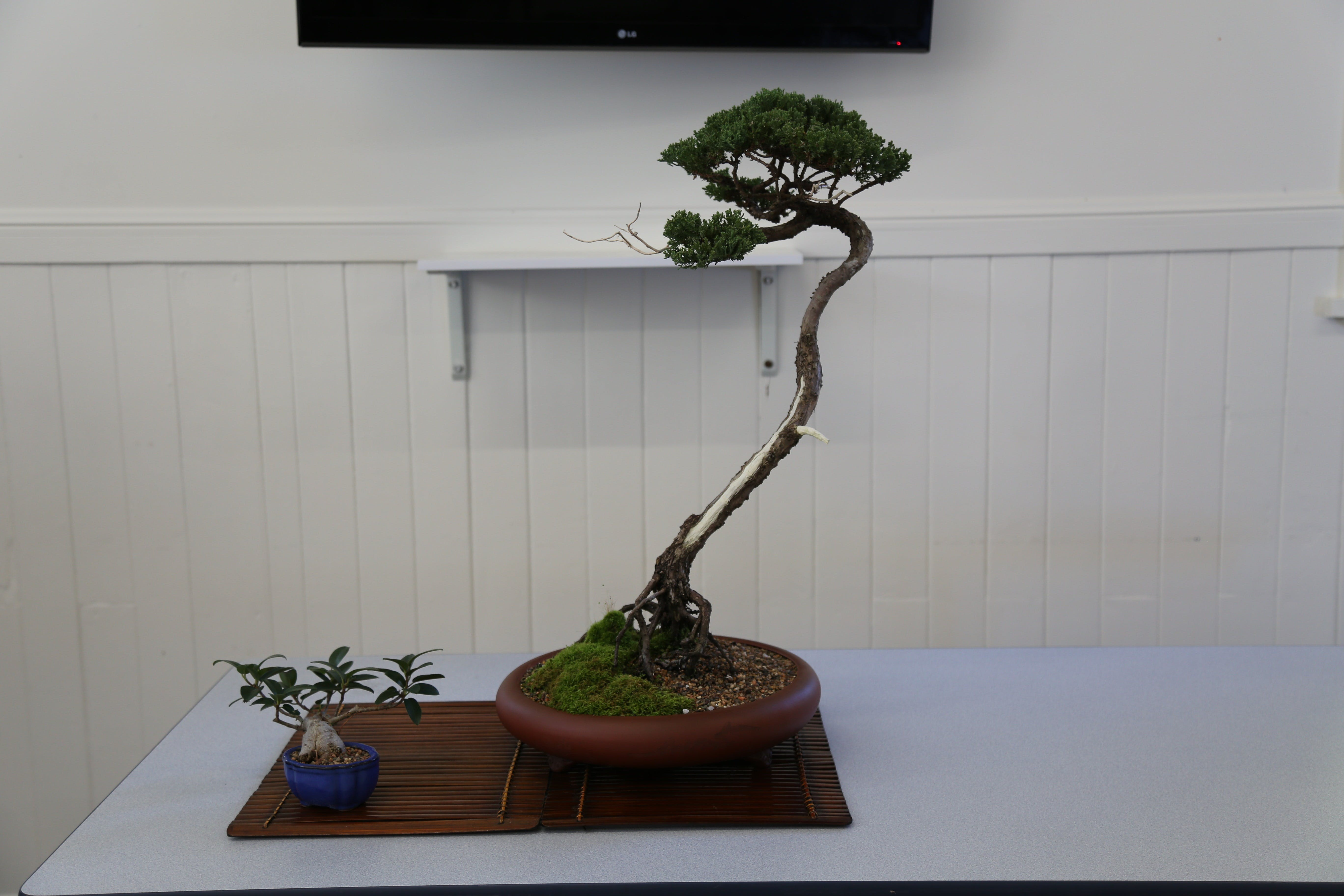 Wauchope Bonsai Workshop Group - Accommodation Melbourne
