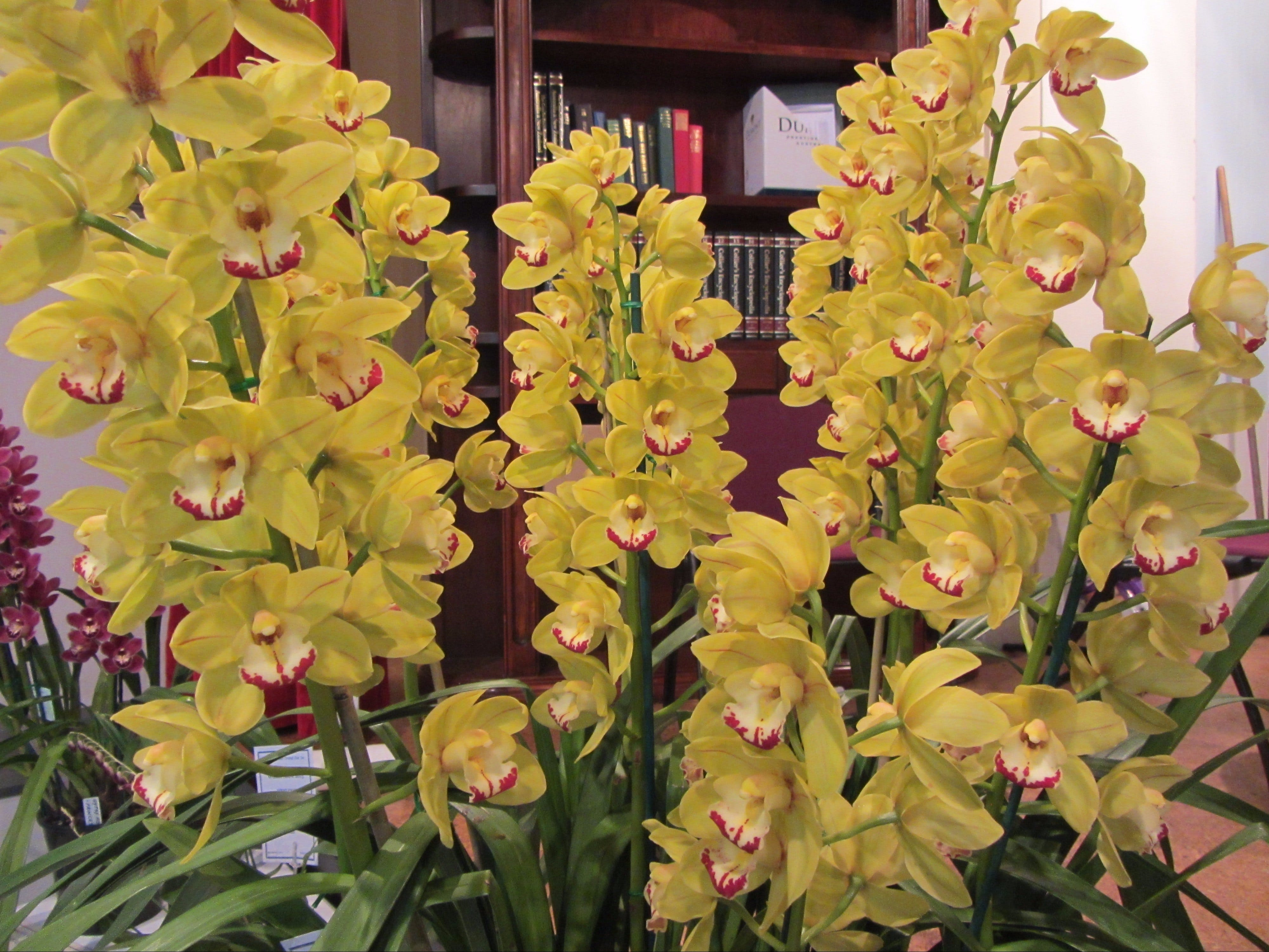 Sapphire Coast Orchid Club Winter Orchid Show - Accommodation Melbourne