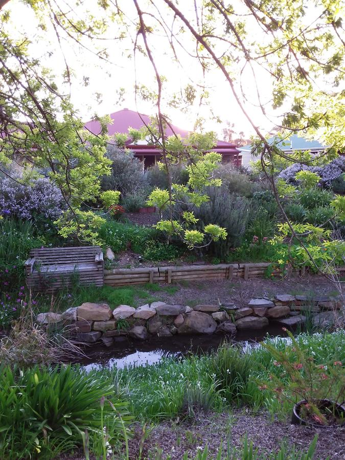 Frog Song at Willunga - Accommodation Melbourne