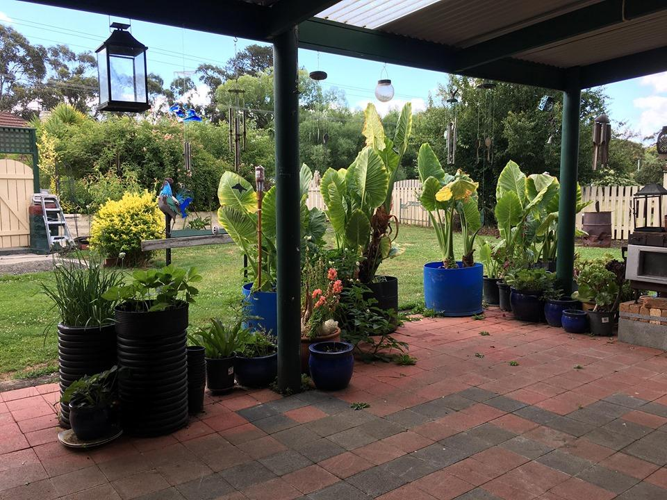 Blue Wren Bungalow - Accommodation Melbourne