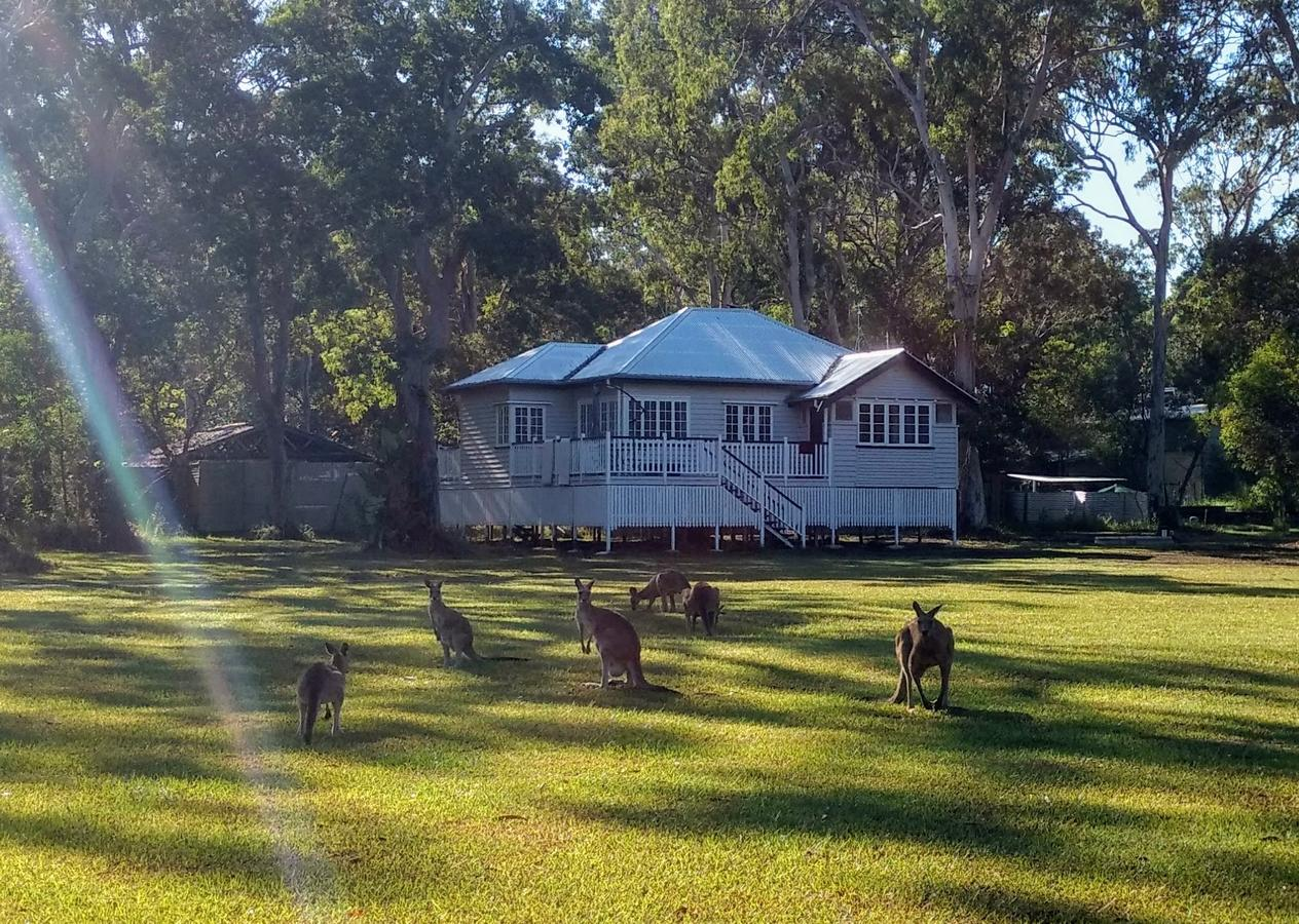Lake Weyba Noosa Lodge  Kangaroos - Accommodation Melbourne